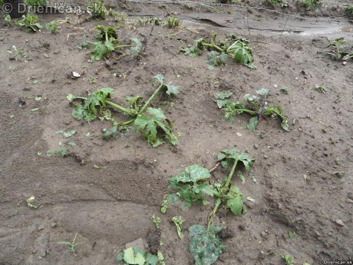 Zo zeleniny tiež veľa nezostalo
