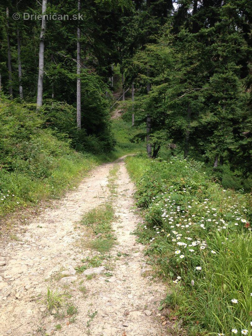 V tichom lese potok tecie_04