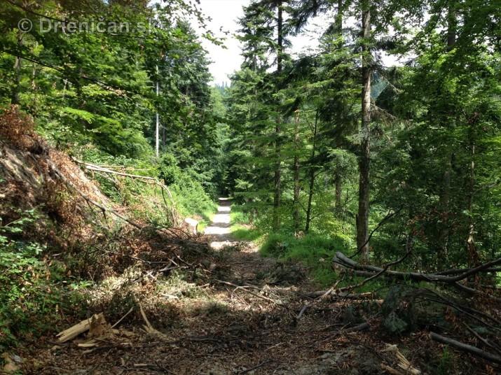 V tichom lese potok tecie_05