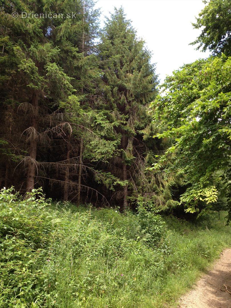 V tichom lese potok tecie_09