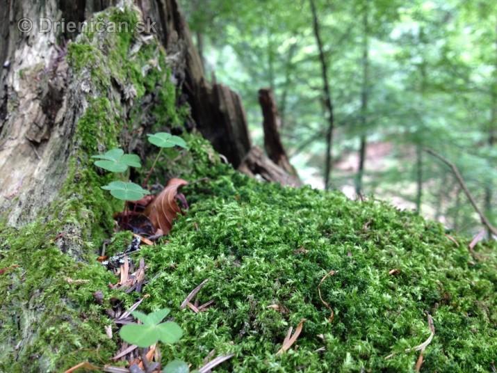 V tichom lese potok tecie_13