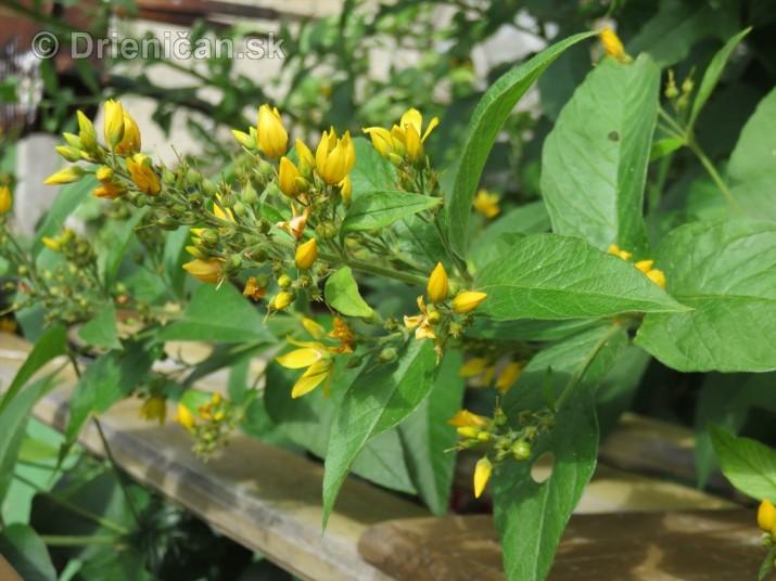zahradkari drienica_32