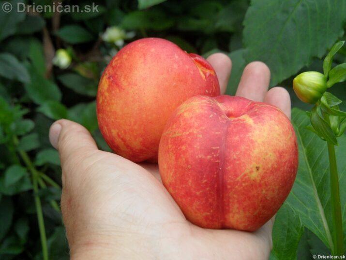 Letné ovocie a zelenina
