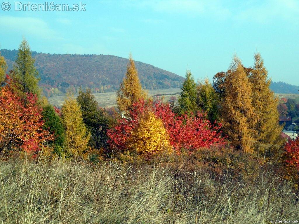 Farebnosť lístia v jeseni určuje druh stromu. V pozadí vidieť Háj.
