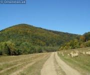 Háj, pohľad od vodnej priehrady, napravo ovce spásajúce poslednú zelenú trávu v sezóne.