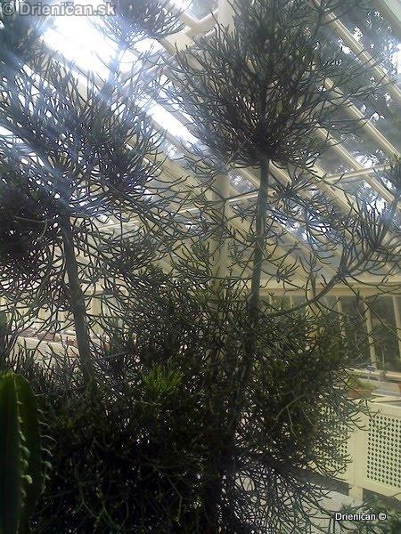 Botanic Gardens Glasnevin Dublin_006