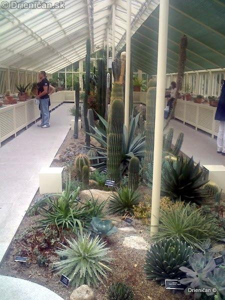 Botanic Gardens Glasnevin Dublin_010