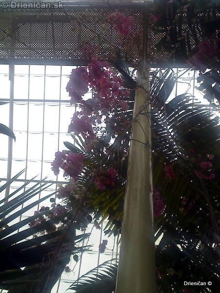 Botanic Gardens Glasnevin Dublin_017