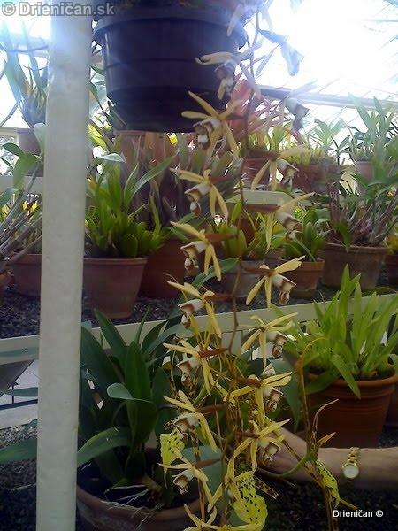 Botanic Gardens Glasnevin Dublin_021