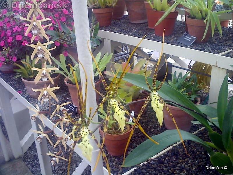 Botanic Gardens Glasnevin Dublin_022