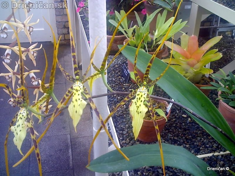 Botanic Gardens Glasnevin Dublin_023
