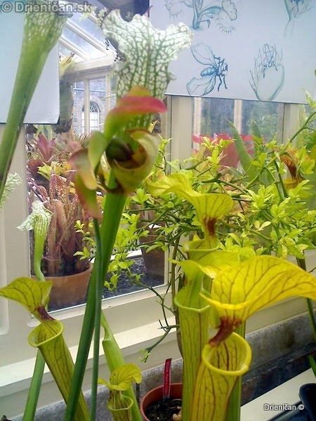 Botanic Gardens Glasnevin Dublin_025