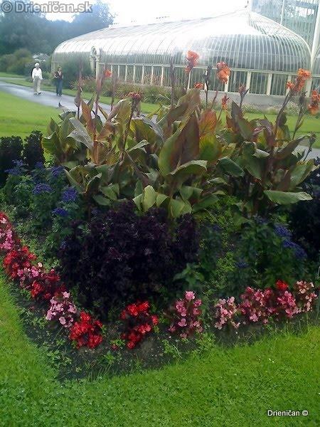 Botanic Gardens Glasnevin Dublin_026