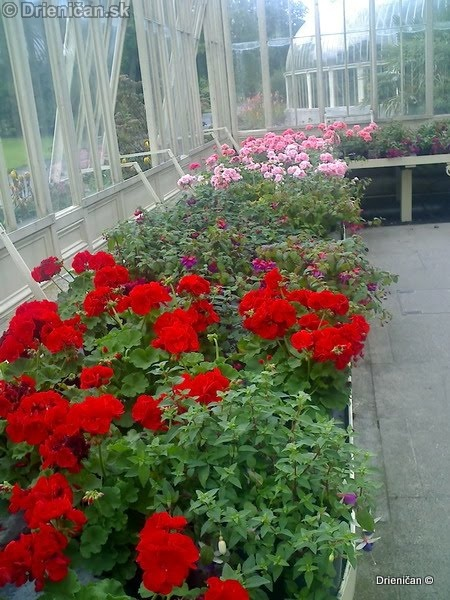 Botanic Gardens Glasnevin Dublin_027
