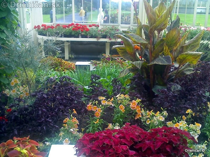 Botanic Gardens Glasnevin Dublin_029