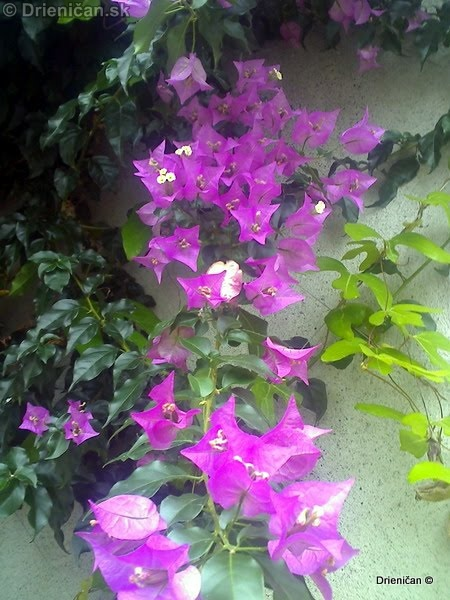 Botanic Gardens Glasnevin Dublin_030