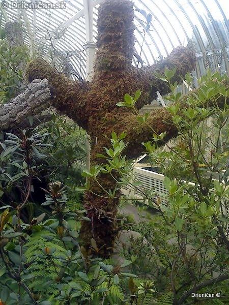 Botanic Gardens Glasnevin Dublin_032
