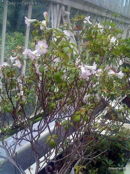 Botanic Gardens Glasnevin Dublin_033