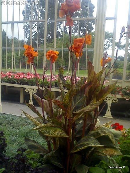 Botanic Gardens Glasnevin Dublin_034