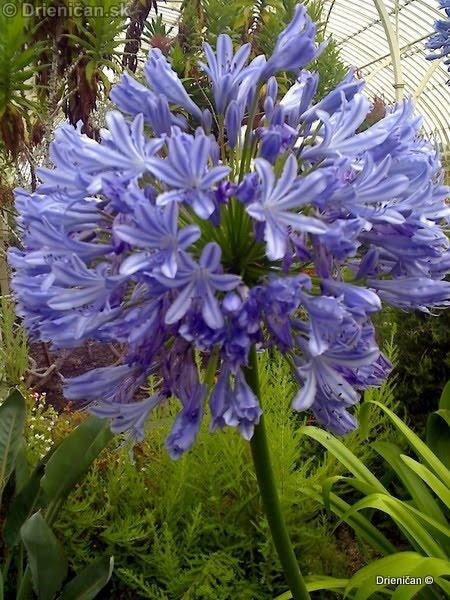 Botanic Gardens Glasnevin Dublin_036