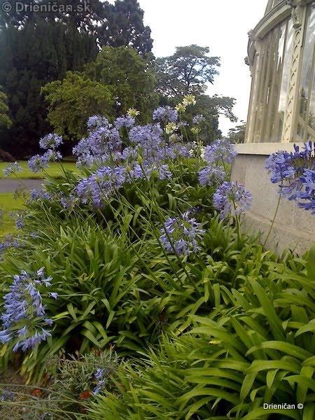 Botanic Gardens Glasnevin Dublin_039