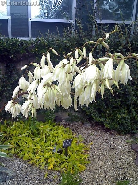 Botanic Gardens Glasnevin Dublin_042