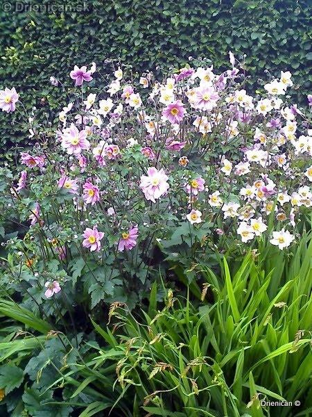 Botanic Gardens Glasnevin Dublin_043