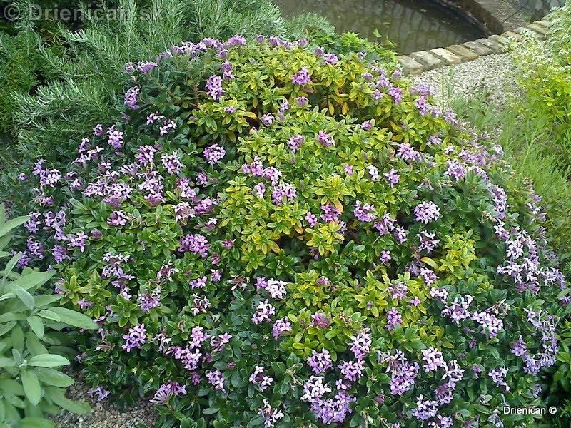 Botanic Gardens Glasnevin Dublin_045