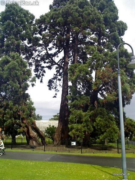 Botanic Gardens Glasnevin Dublin_048