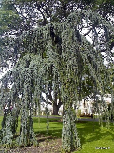 Botanic Gardens Glasnevin Dublin_049