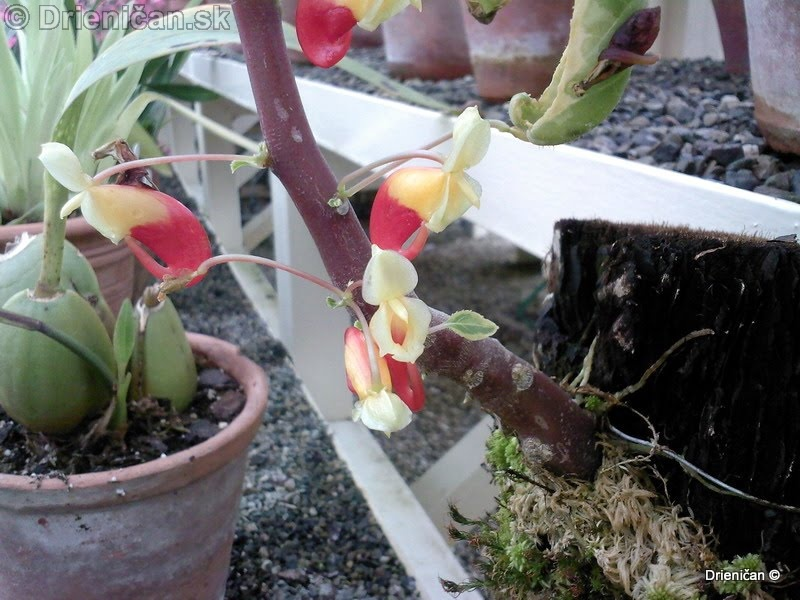 Botanic Gardens Glasnevin Dublin_054