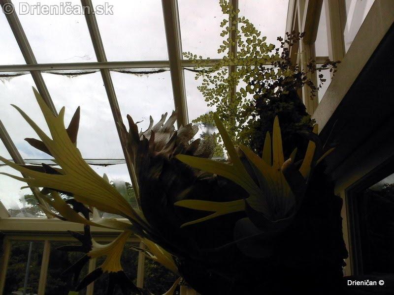 Botanic Gardens Glasnevin Dublin_055