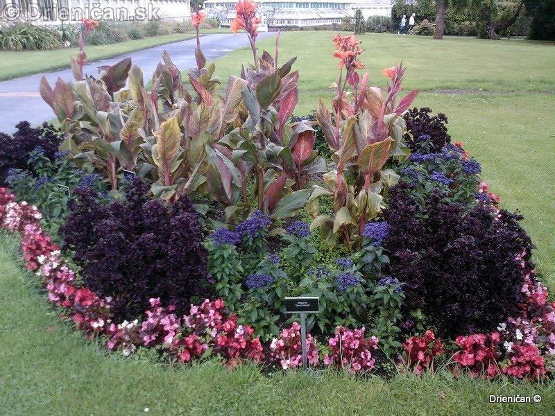 Botanic Gardens Glasnevin Dublin_056