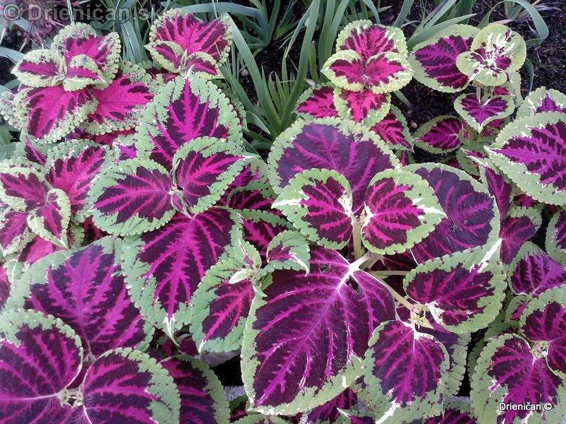 Botanic Gardens Glasnevin Dublin_058