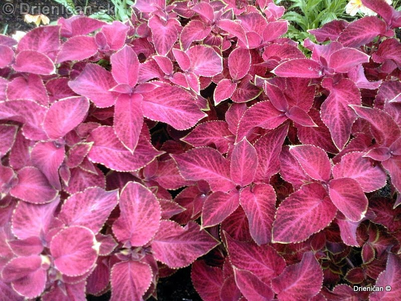 Botanic Gardens Glasnevin Dublin_059