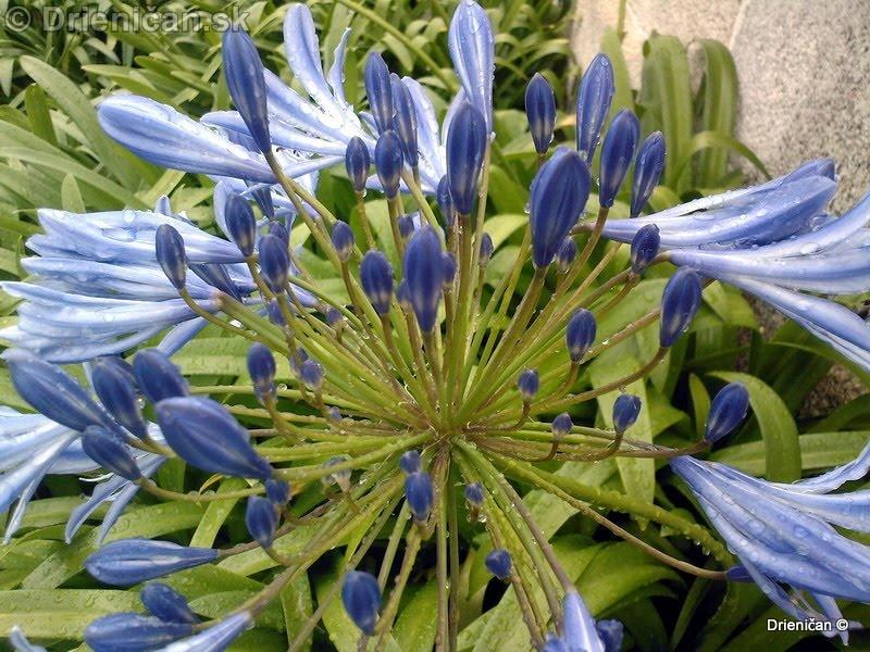 Botanic Gardens Glasnevin Dublin_066
