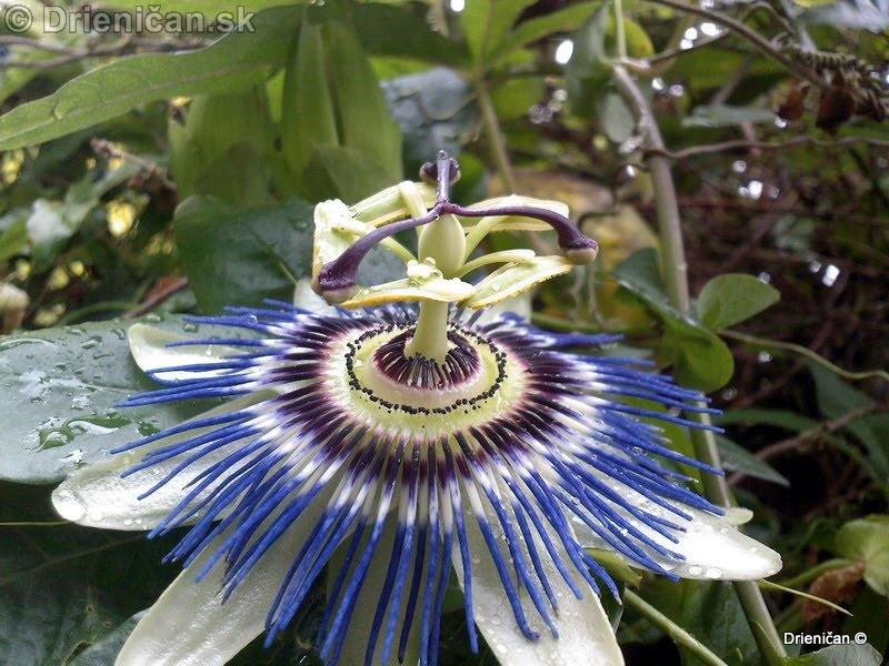 Botanic Gardens Glasnevin Dublin_075