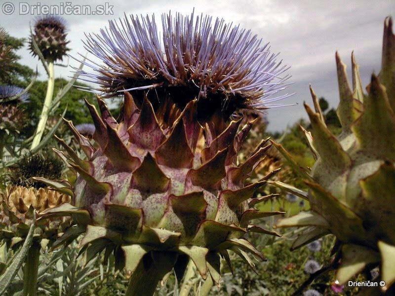 Botanic Gardens Glasnevin Dublin_081
