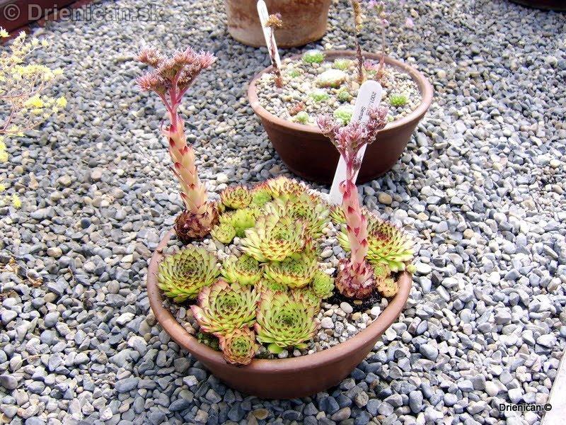 Botanic Gardens Glasnevin Dublin_091