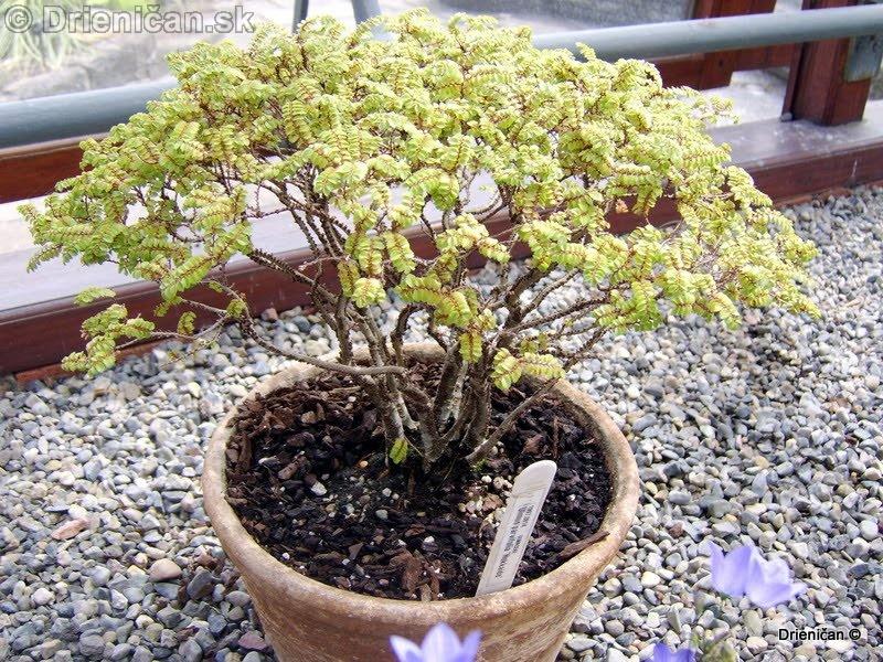 Botanic Gardens Glasnevin Dublin_092