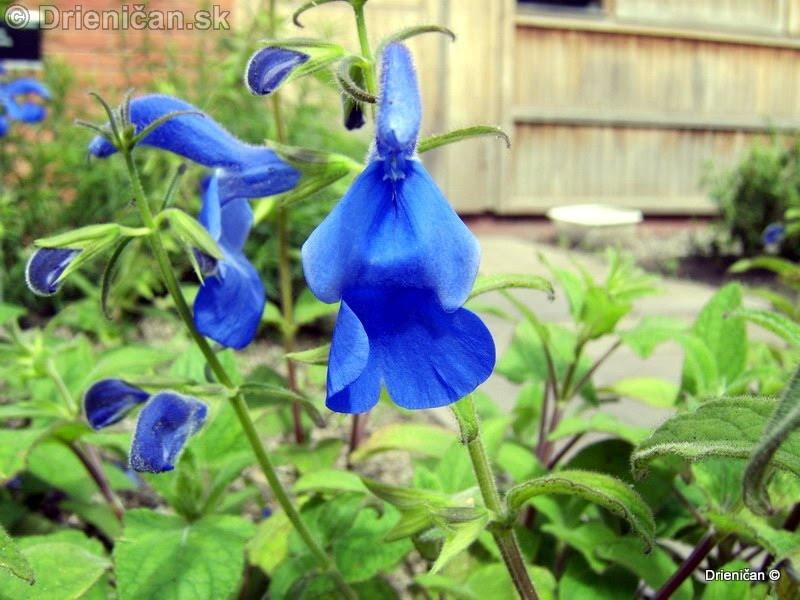 Botanic Gardens Glasnevin Dublin_096