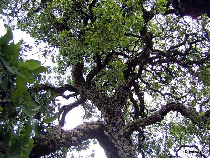 Botanic Gardens Glasnevin Dublin_099
