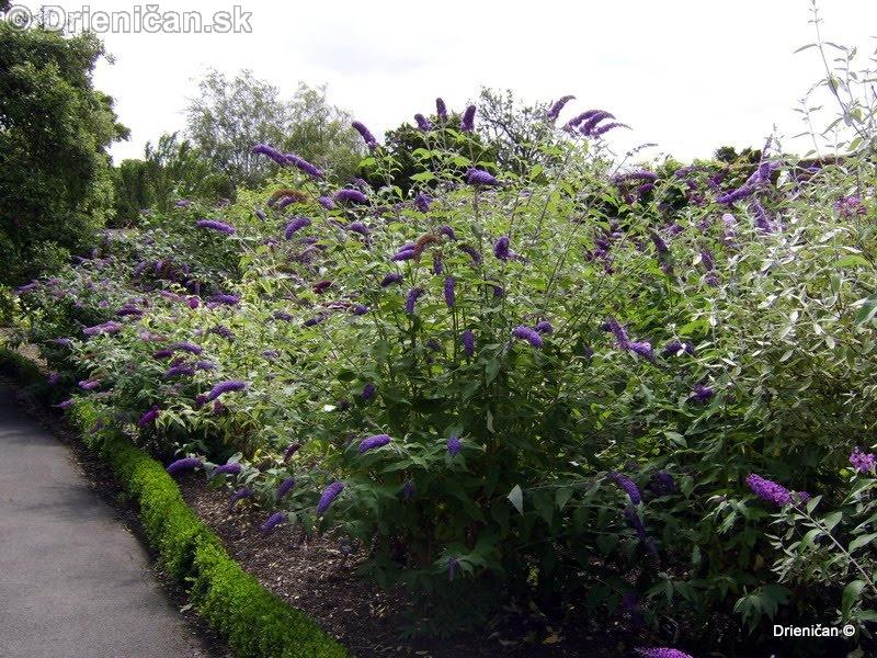 Botanic Gardens Glasnevin Dublin_100