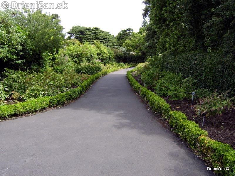 Botanic Gardens Glasnevin Dublin_101