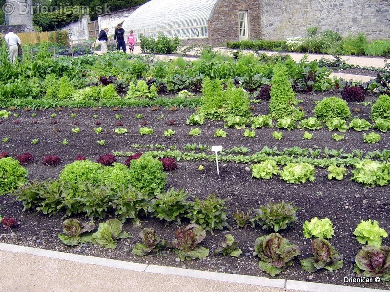 Botanic Gardens Glasnevin Dublin_103