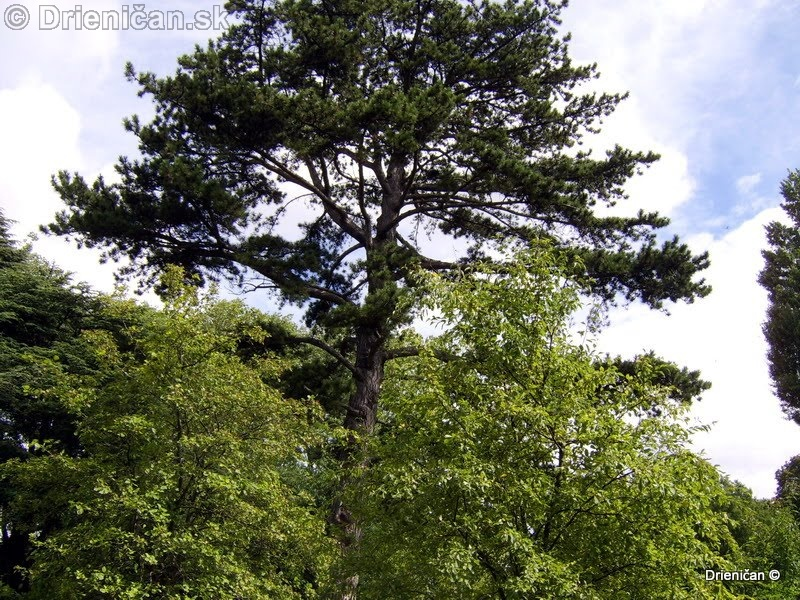 Botanic Gardens Glasnevin Dublin_111