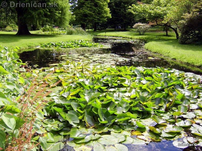 Botanic Gardens Glasnevin Dublin_115