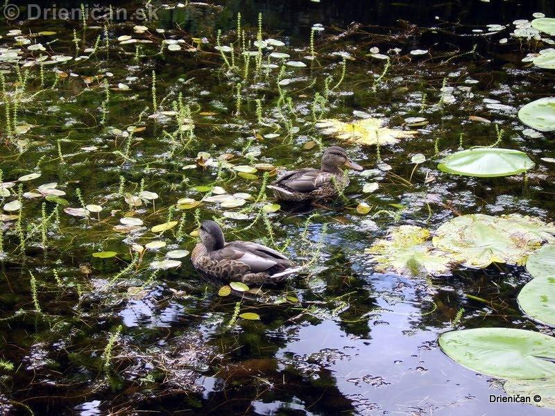 Botanic Gardens Glasnevin Dublin_117