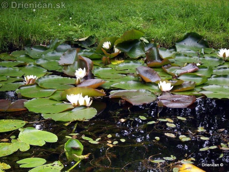 Botanic Gardens Glasnevin Dublin_118