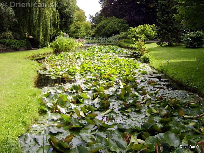 Botanic Gardens Glasnevin Dublin_119